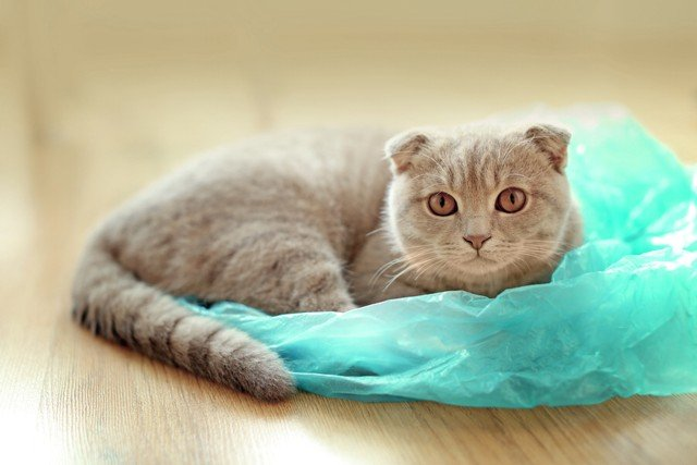Cat in Plastic Bag
